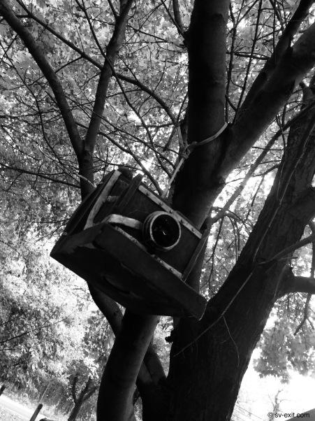 Camera birdhouse