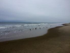 Gulls patrolling the beach