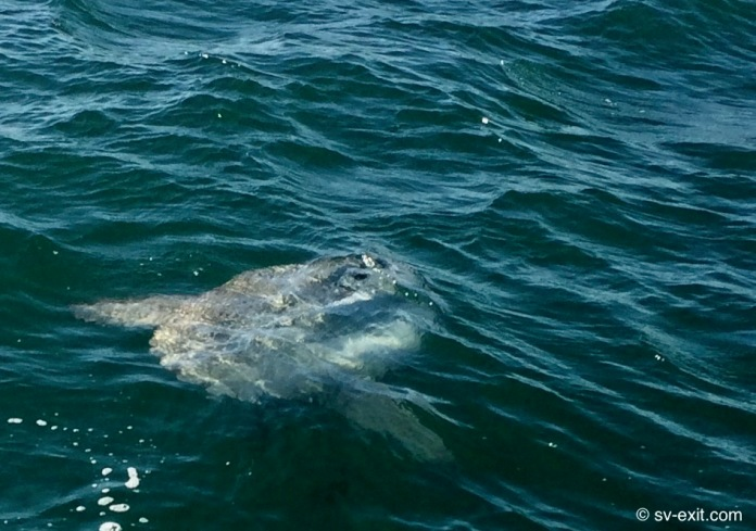 Mola Mola offshore 11/17/18