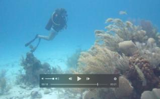 divingabaco11