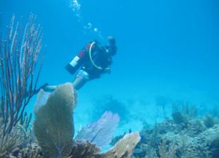 divingabaco12