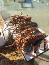 Big-ass lobsters