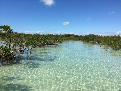Exploring the mangroves