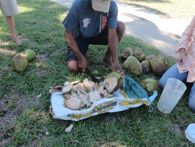 Earl properly demonstrating how to open a coconut