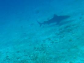 SharkCam1.3.13.19