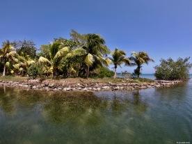 Exploring mangrove canals